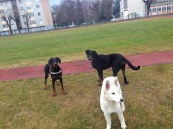 Laïka et ses copains